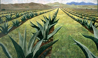 Magueyes con cielo nublado II, 1999 oil on canvas 59.1 x 97.6 in