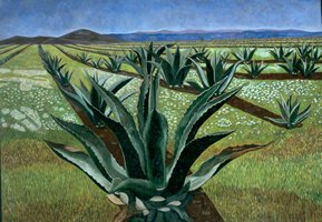 Magueyes con cielo azul II, 1999, oil on canvas 59.1 x 84.6 in