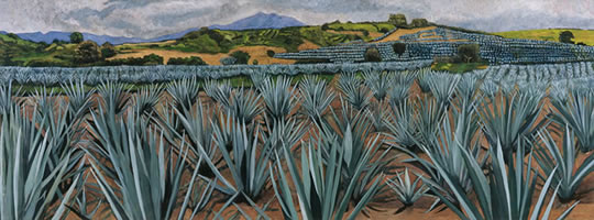 Agaves grandes, 2009, oil on canvas, 33.9 x 90.6 in